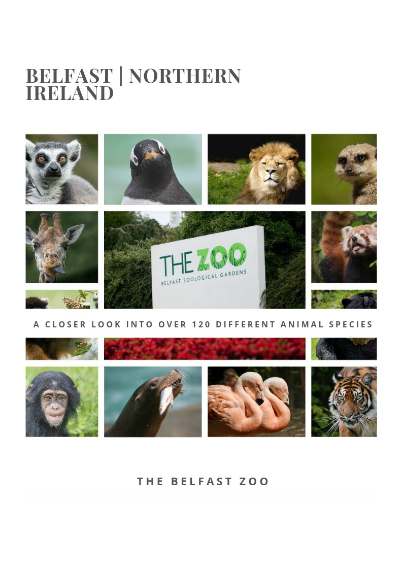 Belfast Zoo: a closer look into over 120 different animal species!